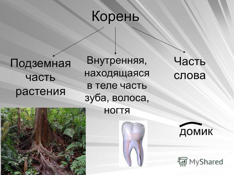 Корень Подземная часть растения Внутренняя, находящаяся в теле часть зуба, волоса, ногтя Часть слова домик