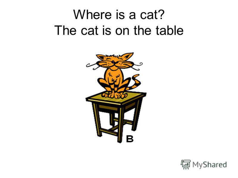Where is a cat? The cat is on the table