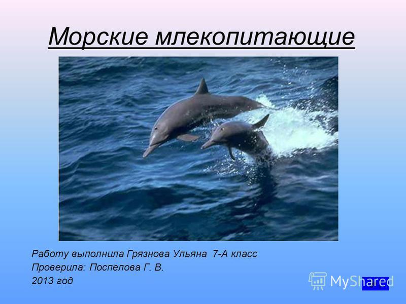 Морские млекопитающие Работу выполнила Грязнова Ульяна 7-А класс Проверила: Поспелова Г. В. 2013 год
