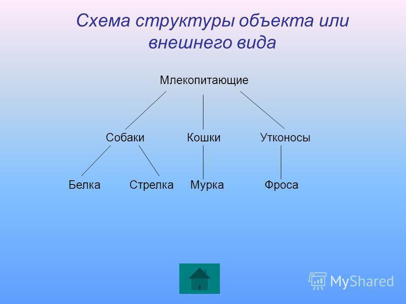 Схема структуры объекта или внешнего вида Млекопитающие Собаки Кошки Утконосы Белка СтрелкаМурка Фроса