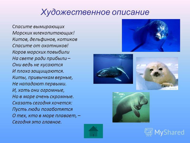 Художественное описание Спасите вымирающих Морских млекопитающих! Китов, дельфинов, котиков Спасите от охотников! Коров морских повыбили На свете ради прибыли – Они ведь не кусаются И плохо защищаются. Киты, привычкам верные, Не нападают первыми. И,