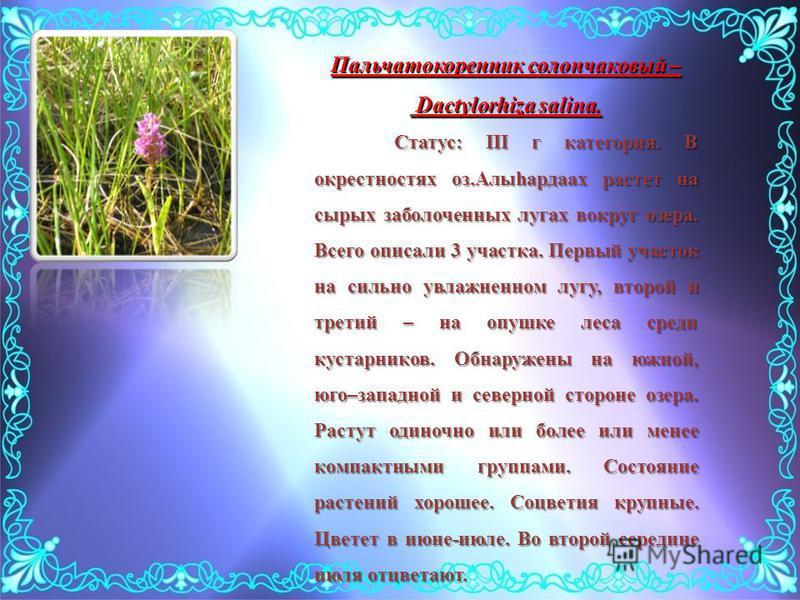 Пальчатокоренник солончаковый – Dactylorhiza salina. Dactylorhiza salina. Статус: III г категория. В окрестностях оз.Алыhардаах растет на сырых заболоченных лугах вокруг озера. Всего описали 3 участка. Первый участок на сильно увлажненном лугу, второ