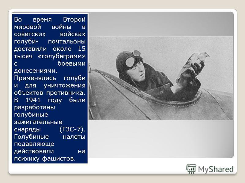 Во время Второй мировой войны в советских войсках голуби- почтальоны доставили около 15 тысяч «голубе грамм» с боевыми донесениями. Применялись голуби и для уничтожения объектов противника. В 1941 году были разработаны голубиные зажигательные снаряды