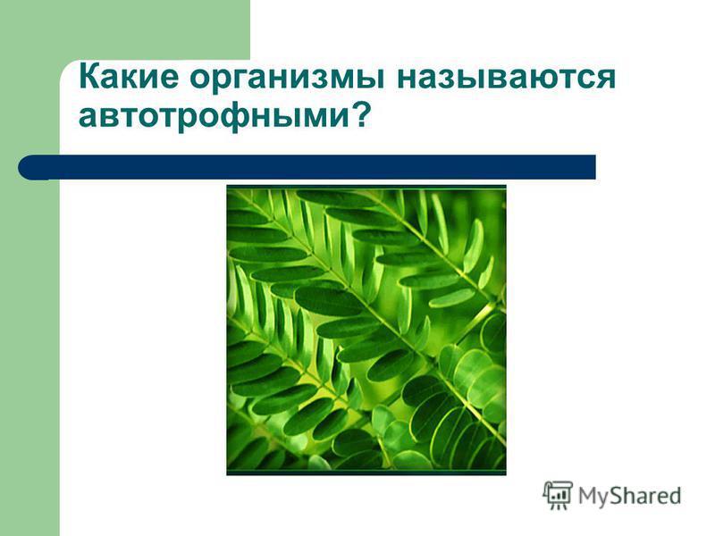 Какие организмы называются автотрофными?