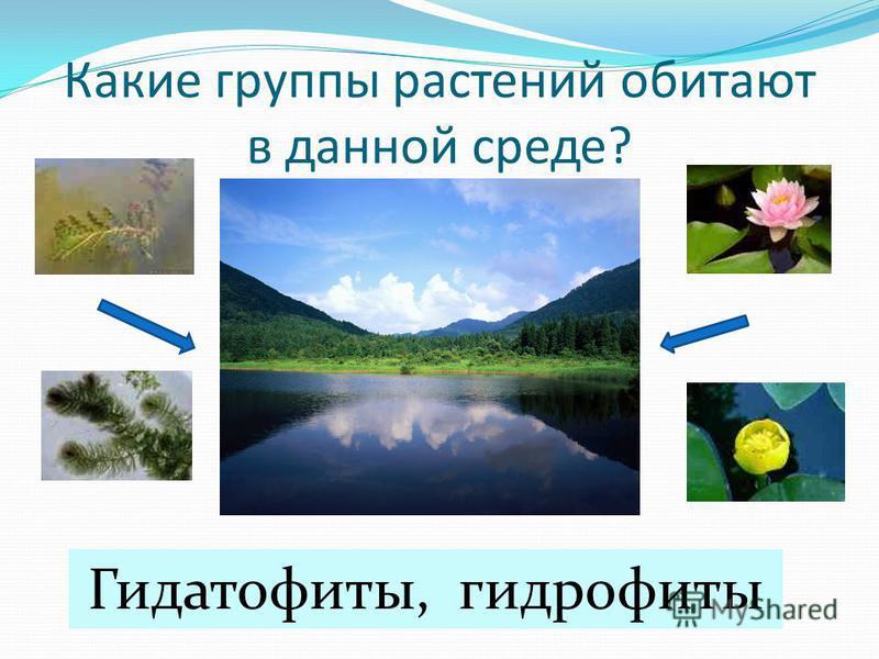 Какие группы растений обитают в данной среде? Гидатофиты, гидрофиты