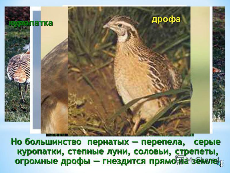 За исключением зайцев, норы роют все степные грызуны, лисицы, барсуки, ежи и даже некоторые птицы (удоды, береговые ласточки и обыкновенные каменки). лисицабарсукёж удод