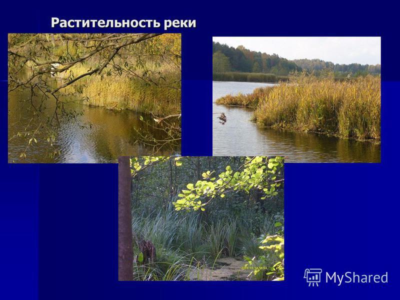 Растительность реки