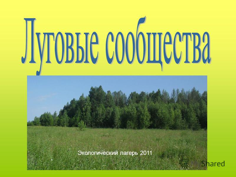 Экологический лагерь 2011
