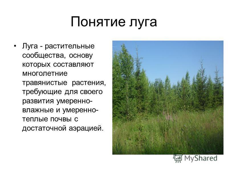 Понятие луга Луга - растительные сообщества, основу которых составляют многолетние травянистые растения, требующие для своего развития умеренно- влажные и умеренно- теплые почвы с достаточной аэрацией.