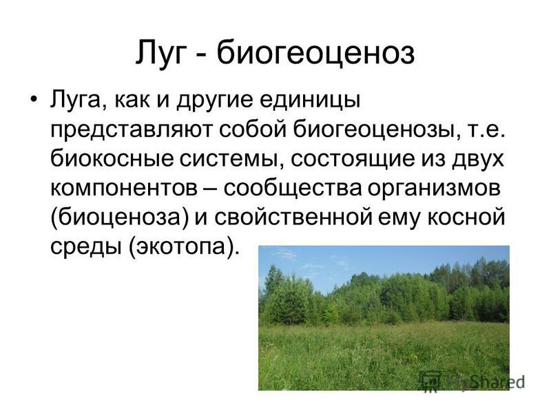 Луг - биогеоценоз Луга, как и другие единицы представляют собой биогеоценозы, т.е. биокосные системы, состоящие из двух компонентов – сообщества организмов (биоценоза) и свойственной ему косной среды (экотопа).