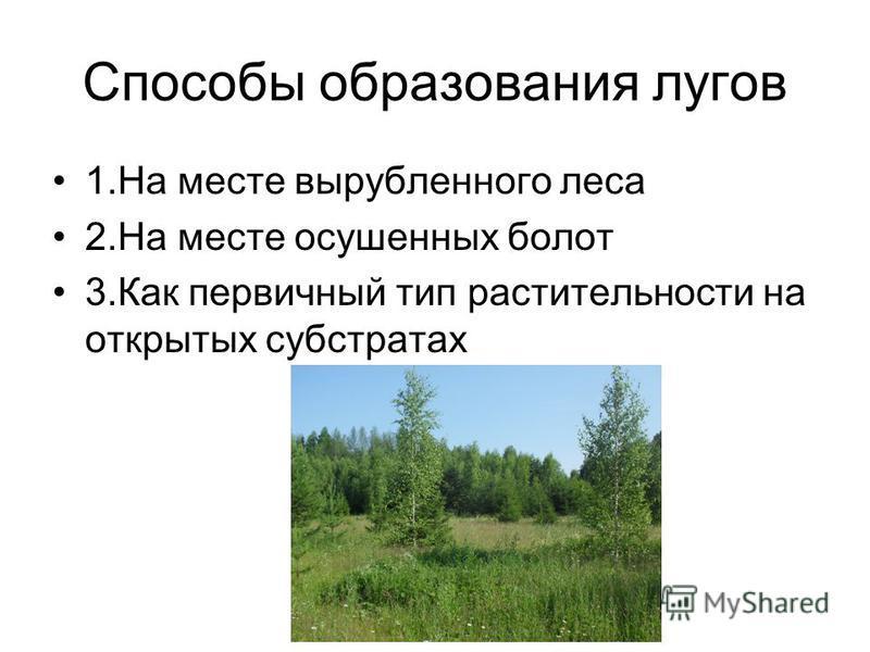 Способы образования лугов 1. На месте вырубленного леса 2. На месте осушенных болот 3. Как первичный тип растительности на открытых субстратах