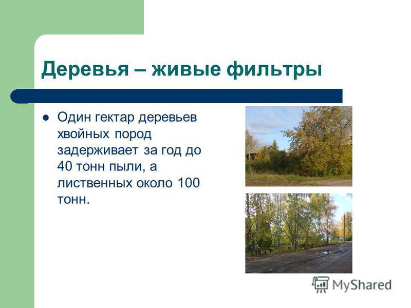 Деревья – живые фильтры Один гектар деревьев хвойных пород задерживает за год до 40 тонн пыли, а лиственных около 100 тонн.