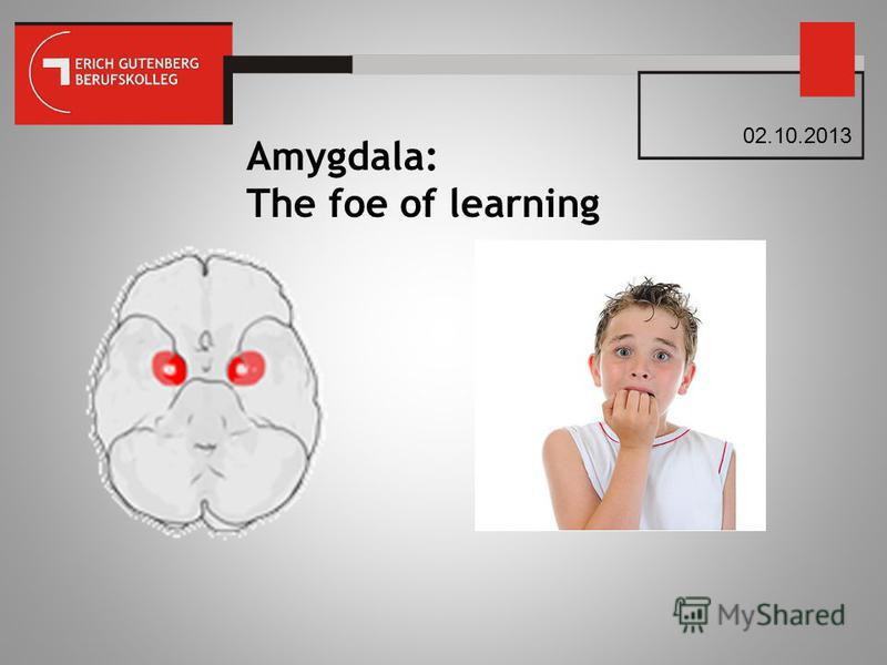Amygdala: The foe of learning 02.10.2013