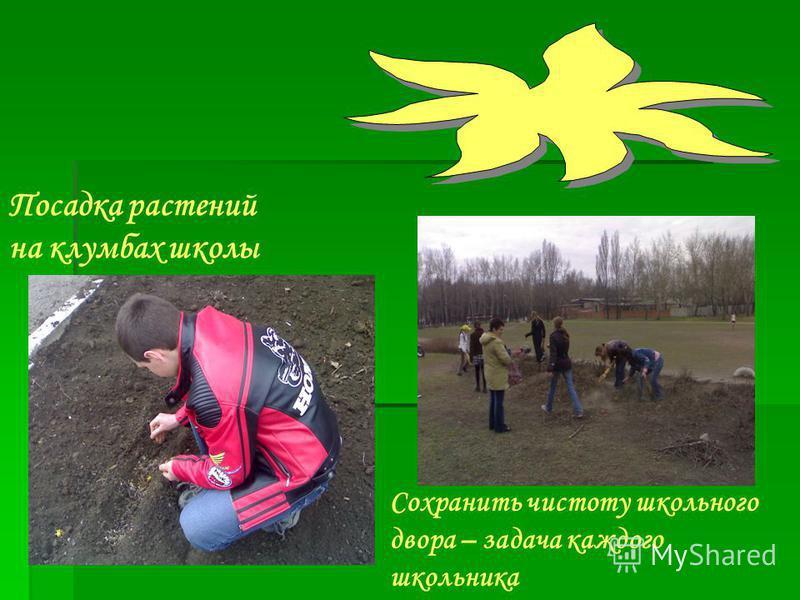 Посадка растений на клумбах школы Сохранить чистоту школьного двора – задача каждого школьника