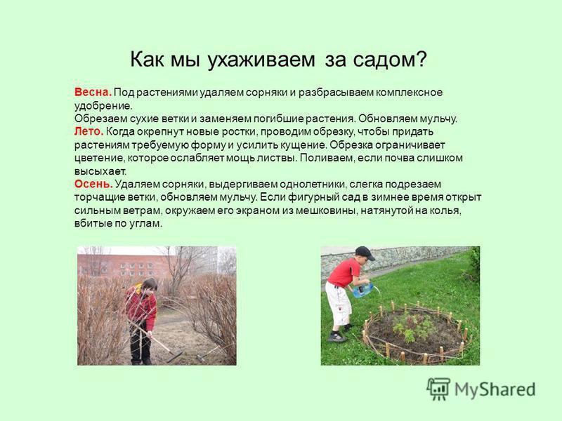 Весна. Под растениями удаляем сорняки и разбрасываем комплексное удобрение. Обрезаем сухие ветки и заменяем погибшие растения. Обновляем мульчу. Лето. Когда окрепнут новые ростки, проводим обрезку, чтобы придать растениям требуемую форму и усилить ку