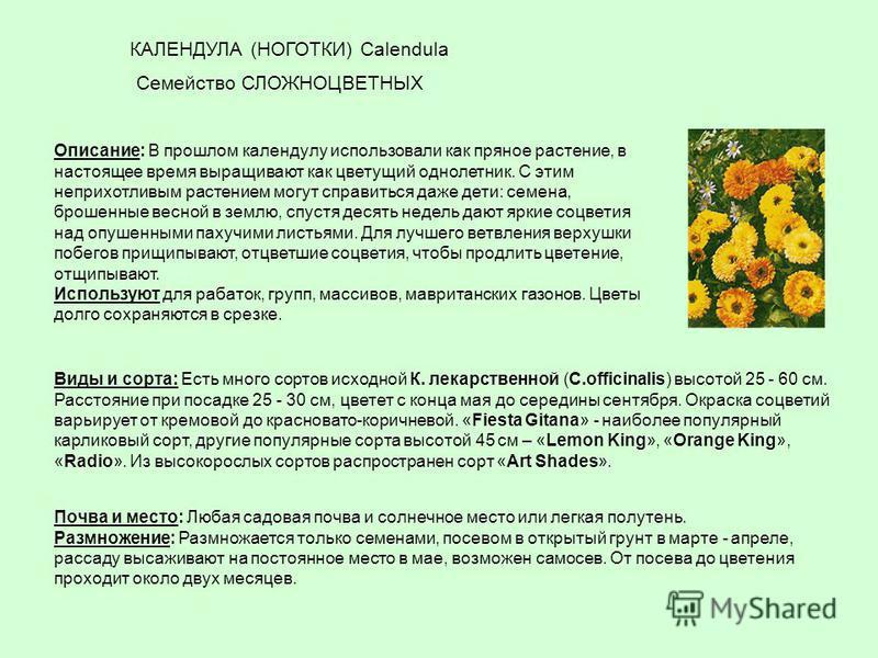 Описание: В прошлом календулу использовали как пряное растение, в настоящее время выращивают как цветущий однолетник. С этим неприхотливым растением могут справиться даже дети: семена, брошенные весной в землю, спустя десять недель дают яркие соцвети