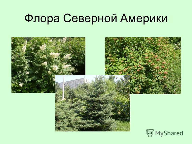 Флора Северной Америки