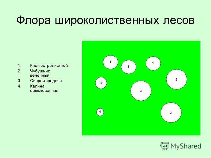 Флора широколиственных лесов 1. Клен остролистный. 2. Чубушник венечный. 3. Сипрея средняя. 4. Калина обыкновенная.