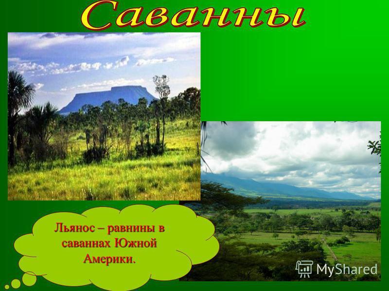 Льянос – равнины в саваннах Южной Америки.