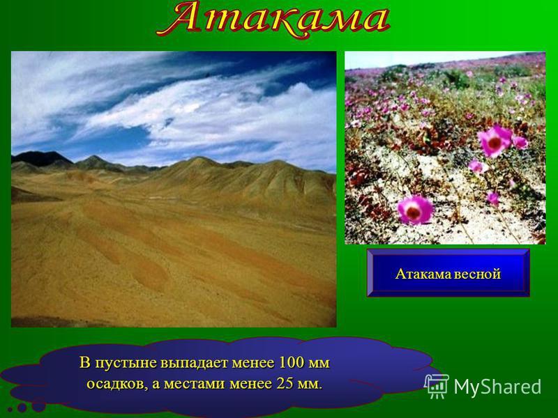 В пустыне выпадает менее 100 мм осадков, а местами менее 25 мм. Атакама весной