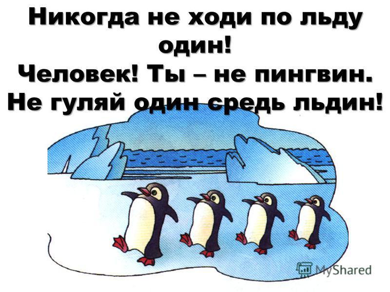 Никогда не ходи по льду один! Человек! Ты – не пингвин. Не гуляй один средь льдин!