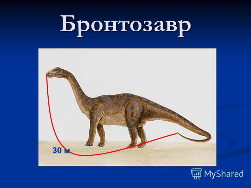 Бронтозавр 30 м
