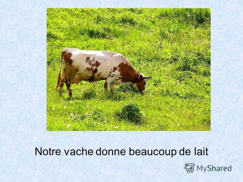 Notre vache donne beaucoup de lait