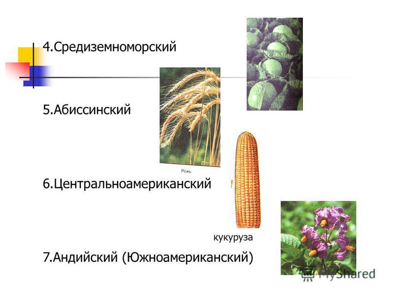 4. Средиземноморский 5. Абиссинский 6. Центральноамериканский 7. Андийский (Южноамериканский) кукуруза