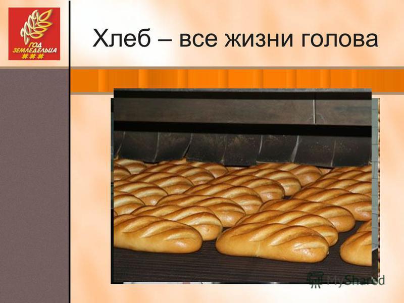 Хлеб – все жизни голова