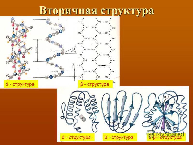 Вторичная структура ά - структураβ - структура ά - структураβ - структураά-β - структура