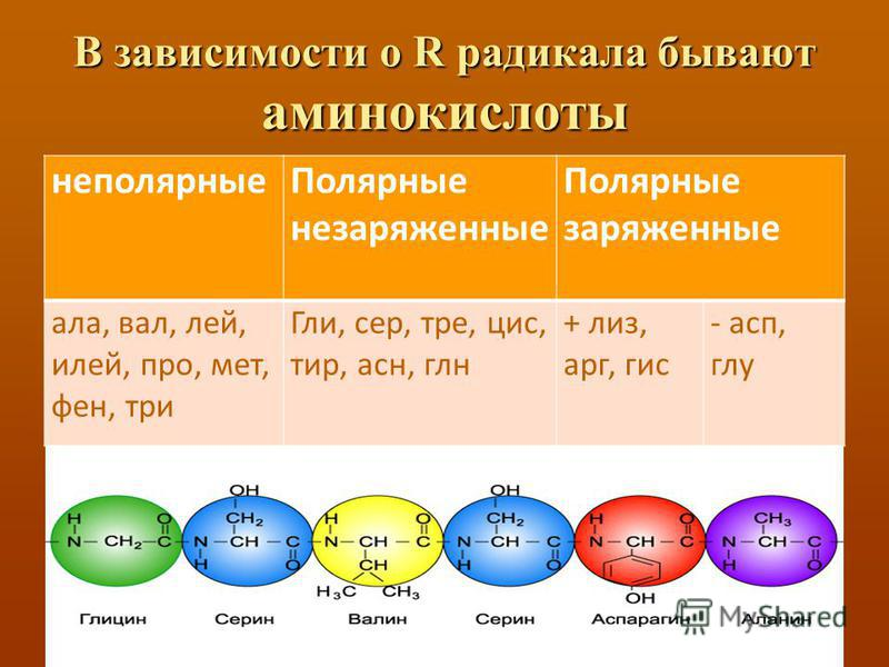 В зависимости о R радикала бывают аминокислоты неполярные Полярные незаряженные Полярные заряженные ала, вал, лей, илей, про, мет, фен, три Гли, сер, три, цис, тир, есн, глен + лиз, арг, гис - асп, глу