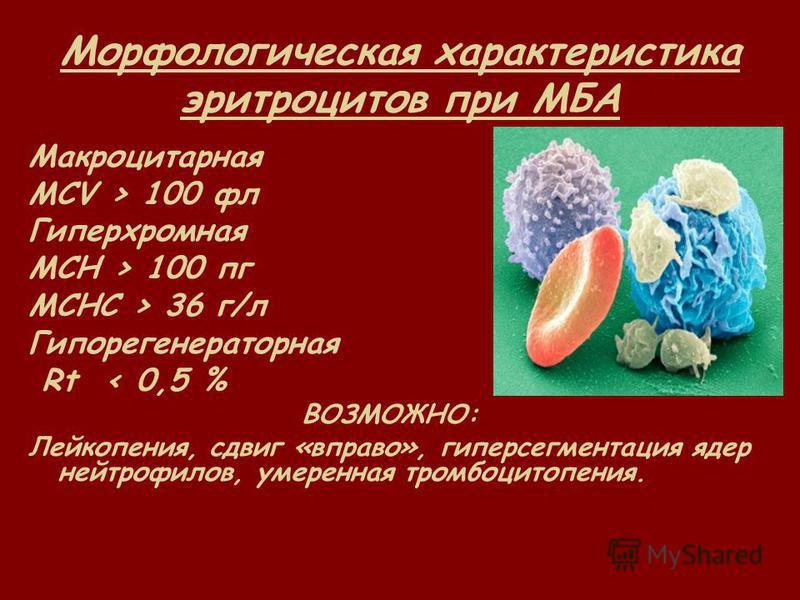 Морфологическая характеристика эритроцитов при МБА Макроцитарная MCV > 100 фл Гиперхромная MCH > 100 пк MCHC > 36 г/л Гипорегенераторная Rt < 0,5 % ВОЗМОЖНО: Лейкопения, сдвиг «вправо», гиперсегментация ядер нейтрофилов, умеренная тромбоцитопения.