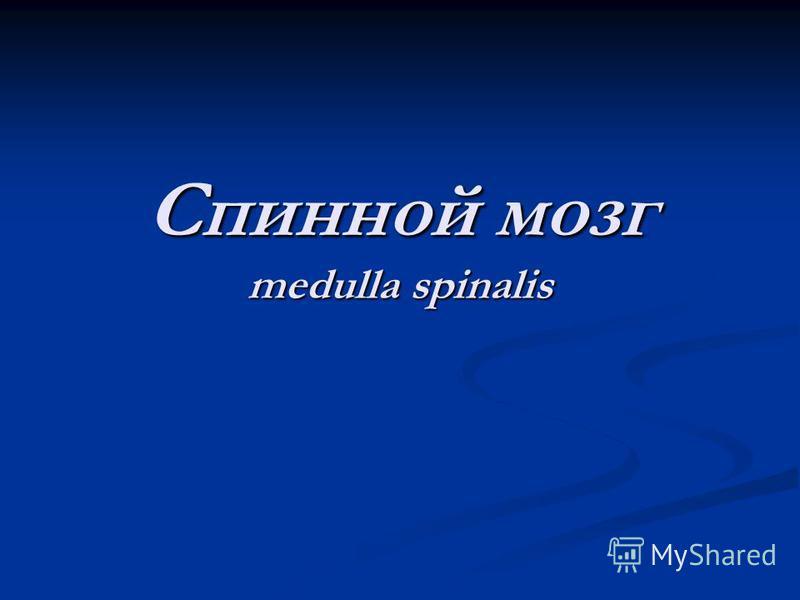 Спинной мозг medulla spinalis