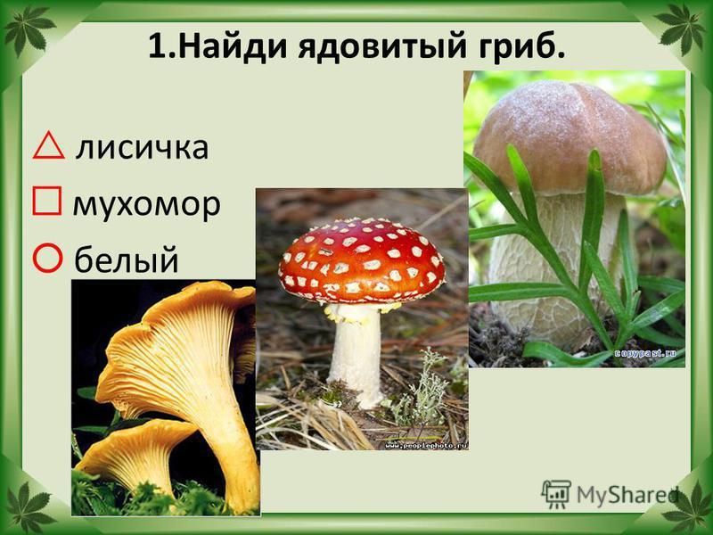 1. Найди ядовитый гриб. лисичка мухомор белый