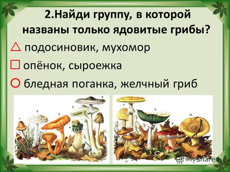 2. Найди группу, в которой названы только ядовитые грибы? подосиновик, мухомор опёнок, сыроежка бледная поганка, желчный гриб
