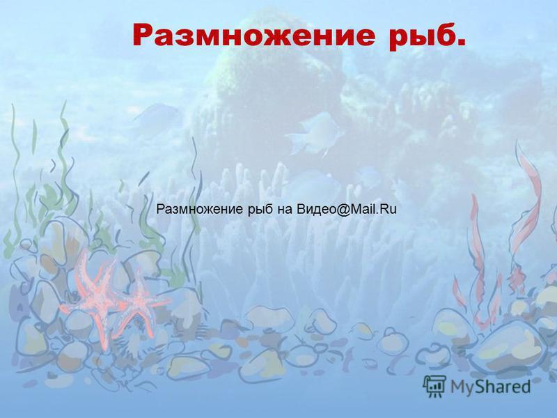 Размножение рыб. Размножение рыб на Видео@Mail.Ru