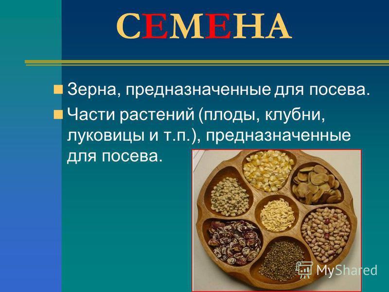 СЕМЕНА Зерна, предназначенные для посева. Части растений (плоды, клубни, луковицы и т.п.), предназначенные для посева.