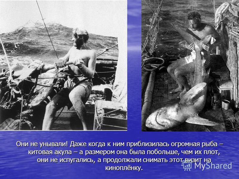 Они не унывали! Даже когда к ним приблизилась огромная рыба – китовая акула – а размером она была побольше, чем их плот, они не испугались, а продолжали снимать этот визит на киноплёнку.