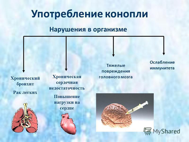 Употребление конопли Хронический бронхит Рак легких Хроническая сердечная недостаточность Повышение нагрузки на сердце Тяжелые повреждения головного мозга Ослабление иммунитета Нарушения в организме