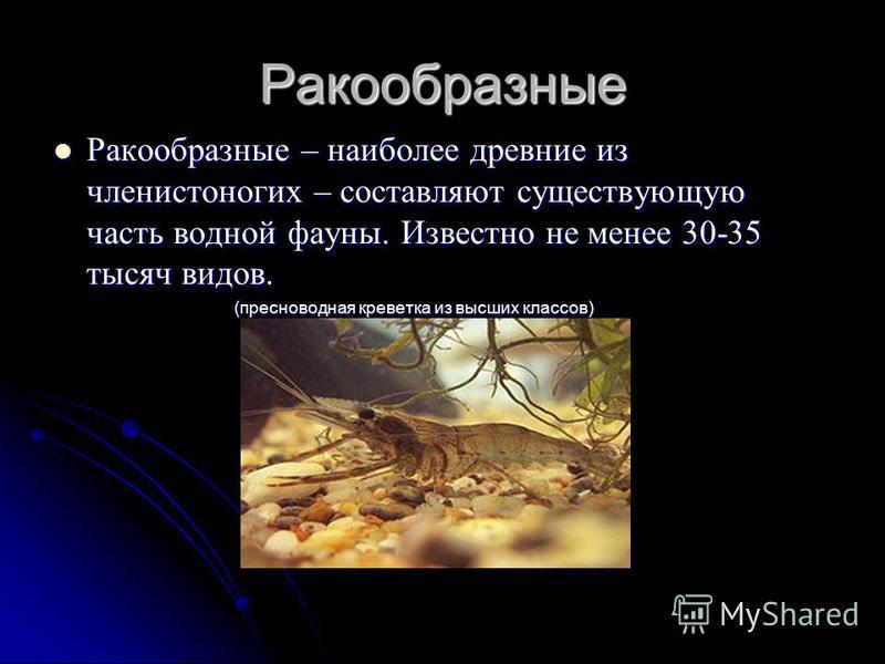 Ракообразные Ракообразные – наиболее древние из членистоногих – составляют существующую часть водной фауны. Известно не менее 30-35 тысяч видов. Ракообразные – наиболее древние из членистоногих – составляют существующую часть водной фауны. Известно н
