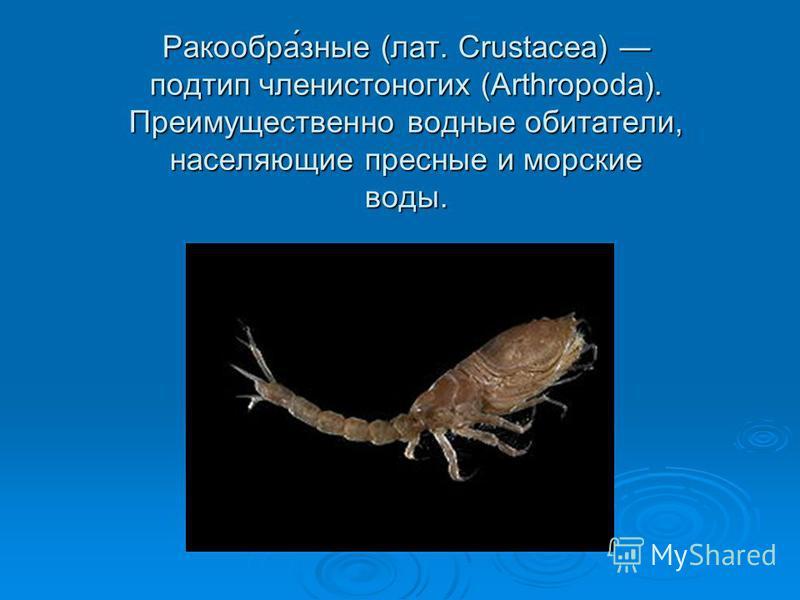 Ракообра́зные (лат. Crustacea) подтип членистоногих (Arthropoda). Преимущественно водные обитатели, населяющие пресные и морские воды.