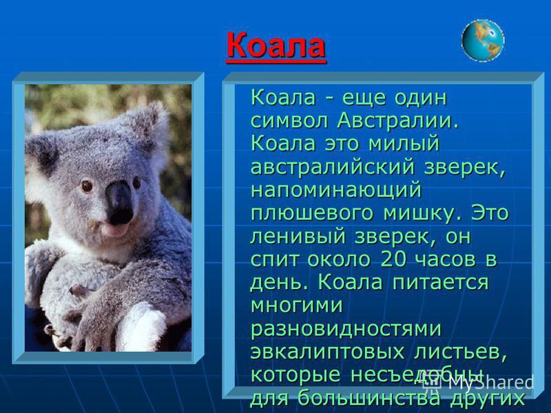 Коала Коала - еще один символ Австралии. Коала это милый австралийский зверек, напоминающий плюшевого мишку. Это ленивый зверек, он спит около 20 часов в день. Коала питается многими разновидностями эвкалиптовых листьев, которые несъедобны для больши