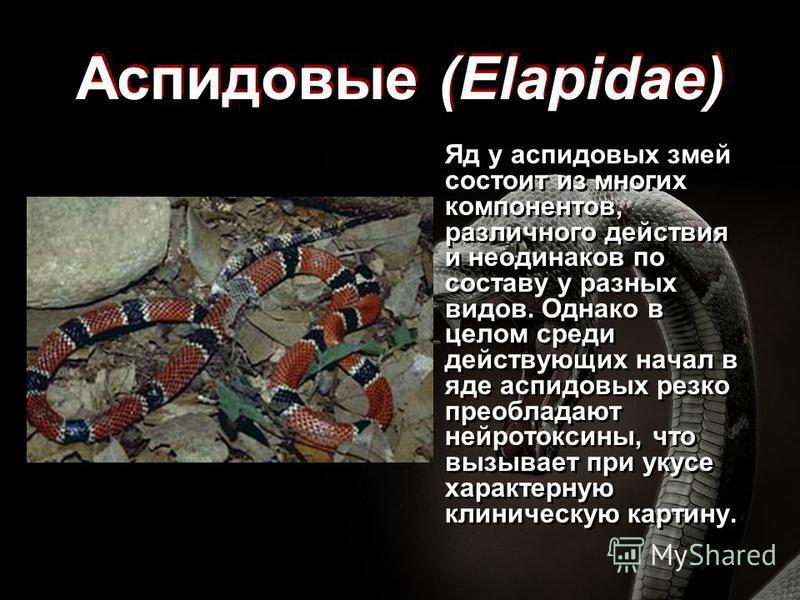 Аспидовые (Elapidae) Яд у аспидовых змей состоит из многих компонентов, различного действия и неодинаков по составу у разных видов. Однако в целом среди действующих начал в яде аспидовых резко преобладают нейротоксины, что вызывает при укусе характер