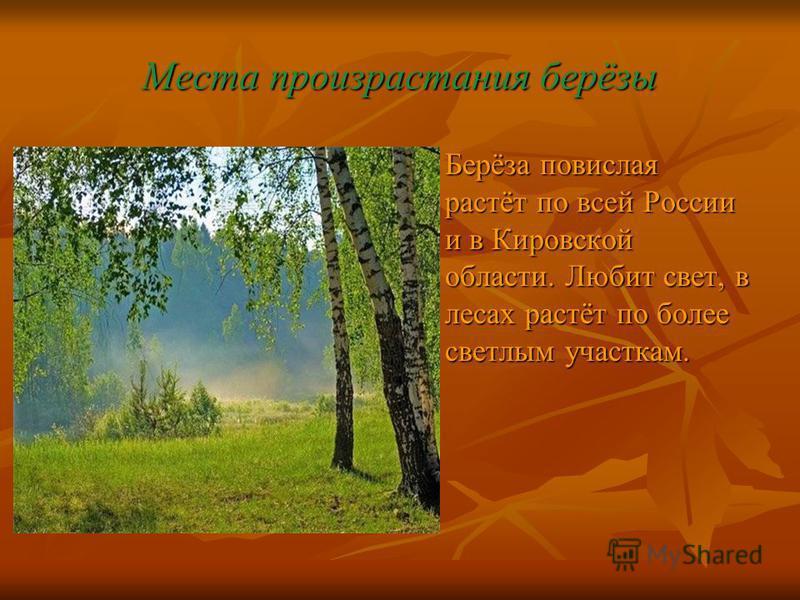 Места произрастания берёзы Берёза повислая растёт по всей России и в Кировской области. Любит свет, в лесах растёт по более светлым участкам.