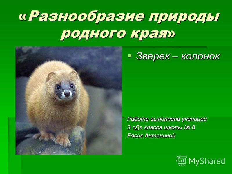 Презентация на тему Ирбис или снежный барс Кислицын М 4