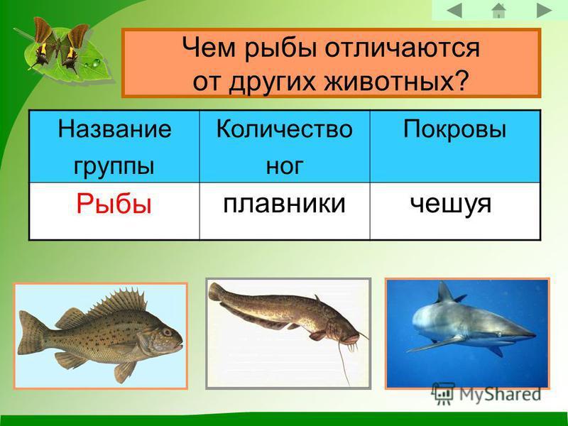 Чем рыбы отличаются от других животных? Название группы Количество ног Покровы Рыбы плавники чешуя