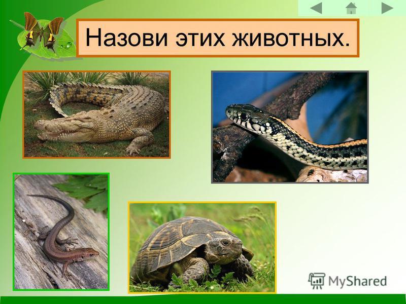 Пресмыкающиеся. Назови этих животных.