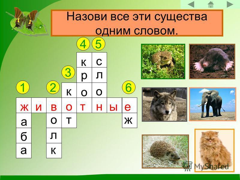 Назови все эти существа одним словом. 12 3 45 6 ж а б а в о л к к о т к р о т с л о н е ж животные