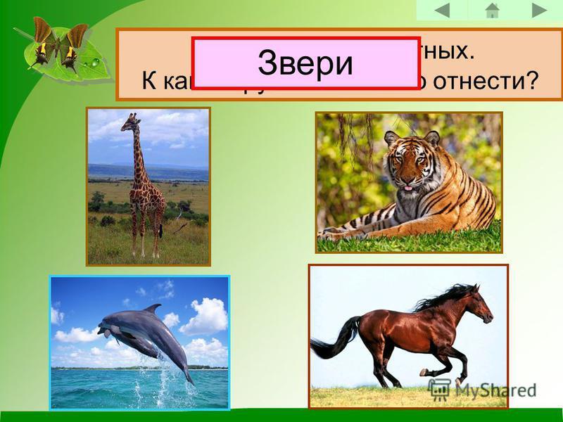 Назови этих животных. К какой группе их можно отнести? Звери