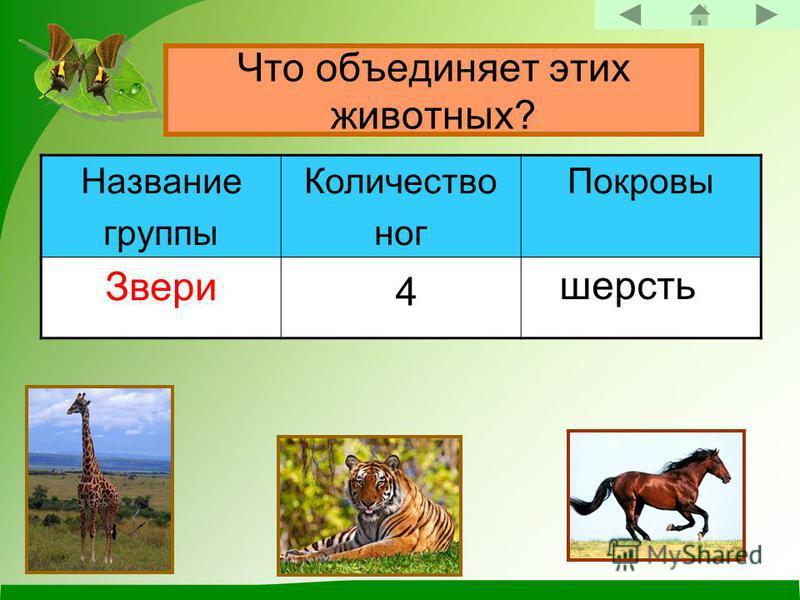 Что объединяет этих животных? Название группы Количество ног Покровы Звери 4 шерсть
